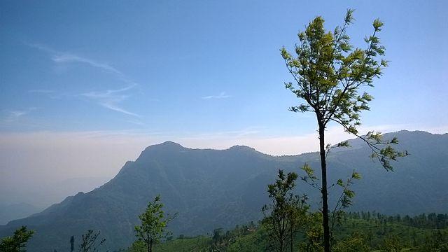 নীলগিরি   Nilgiri